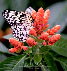 Butterfly on Flower Jigsaw Puzzle