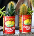 Cactus Tins