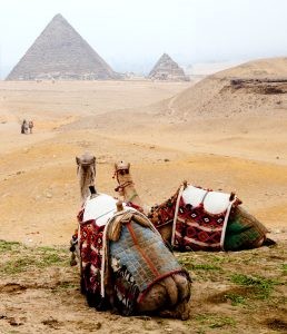 Camels at Giza Jigsaw Puzzle