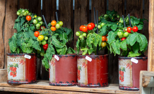 Canned Tomatoes Jigsaw Puzzle