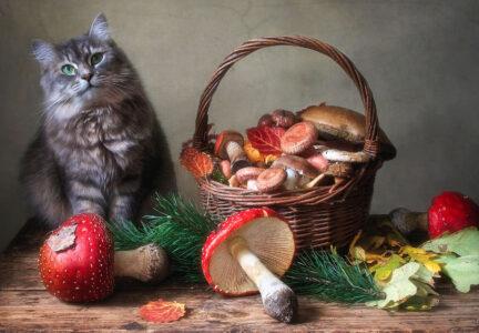 Cat and Mushrooms Jigsaw Puzzle