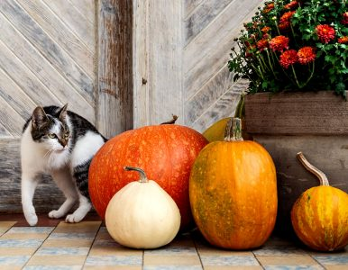 Cat and Pumpkins Jigsaw Puzzle