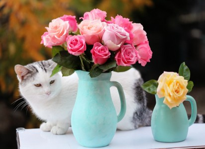 Cat and Roses Jigsaw Puzzle