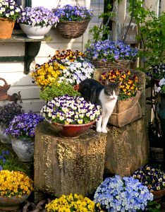 Cat in the Pansies Jigsaw Puzzle