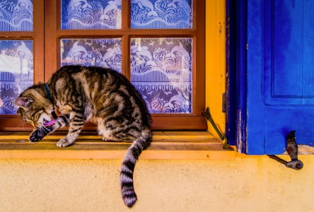 Cat in the Window Jigsaw Puzzle