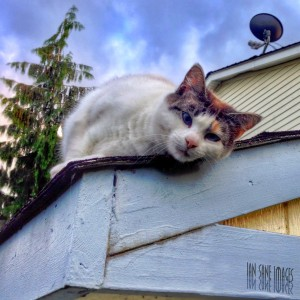 Cat on the Roof Jigsaw Puzzle