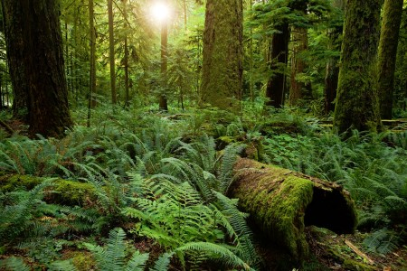 Cathedral Grove Jigsaw Puzzle
