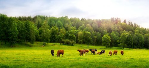 Cattle Farm Jigsaw Puzzle