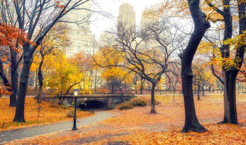 Central Park Fall Jigsaw Puzzle