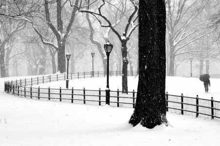 Central Park Snow Jigsaw Puzzle