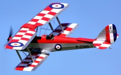 Checkered Tiger Moth