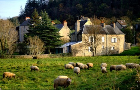 Cherbourg Sheep Jigsaw Puzzle
