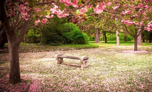 Cherry Tree Petals Jigsaw Puzzle