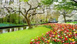 Cherry Trees and Tulips Jigsaw Puzzle
