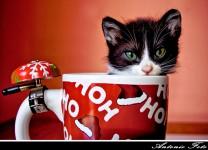 Christmas Kitten Jigsaw Puzzle