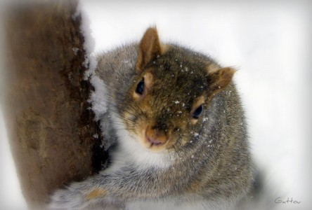 Chubby Squirrel Jigsaw Puzzle