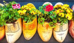 Clog Planters