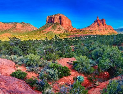 Coconino Forest Jigsaw Puzzle