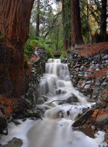 Codornices Creek Jigsaw Puzzle