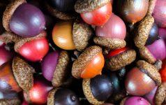 Colored Acorns