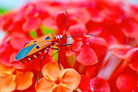 Colorful Bug Jigsaw Puzzle