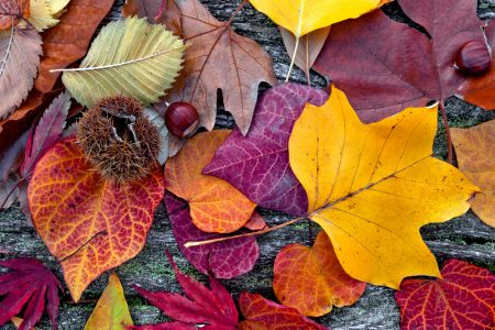 Colors of Autumn Jigsaw Puzzle