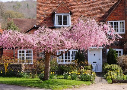Cottage and Cherry Tree Jigsaw Puzzle