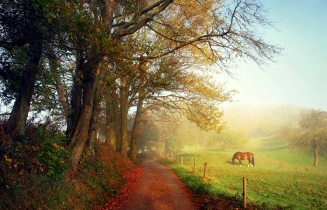 Country Road Jigsaw Puzzle