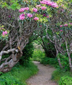 Craggy Pinnacle Trail Jigsaw Puzzle