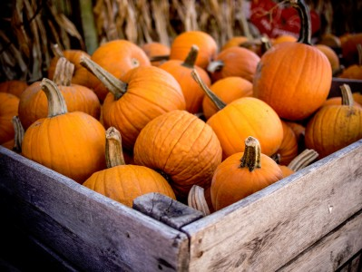 Crate of Pumpkins Jigsaw Puzzle