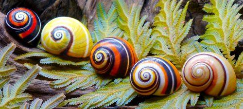 Cuban Snails Jigsaw Puzzle