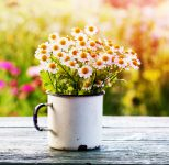 Cup of Daisies