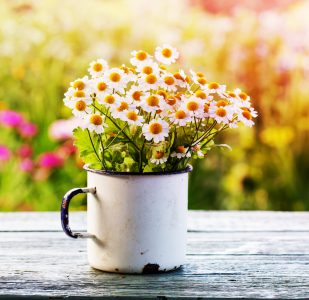 Cup of Daisies Jigsaw Puzzle