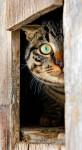 Curious Charlie