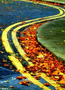 Curves in the Road Jigsaw Puzzle