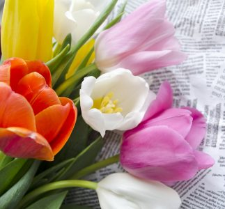 Cut Tulips Jigsaw Puzzle