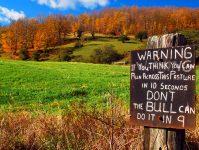 Dangerous Meadow