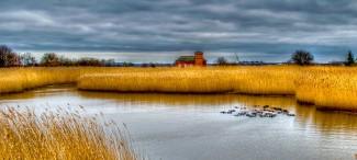 Danish Marsh