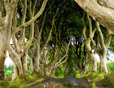 Dark Hedges Jigsaw Puzzle