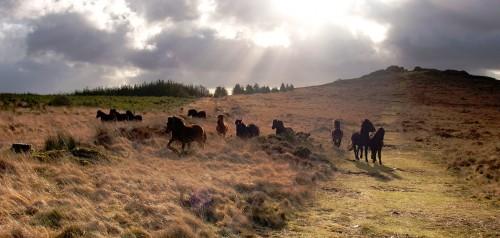 Dartmoor Ponies Jigsaw Puzzle