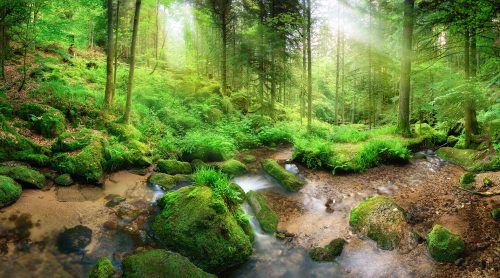 Deep Forest Creek Jigsaw Puzzle