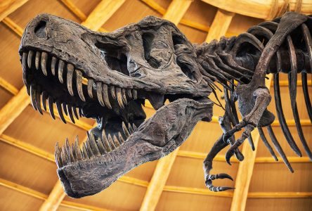 Dinosaur Skeleton Jigsaw Puzzle