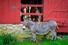 Donkey and Horses