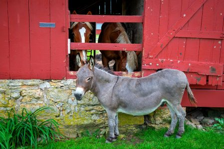 Donkey and Horses Jigsaw Puzzle