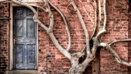 Door and Tree