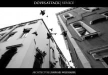 Doves Attack