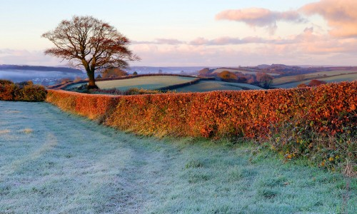 English Hedgerow Jigsaw Puzzle