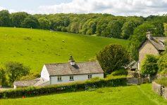 English Sheep Farm