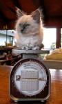Extra Postage Cat