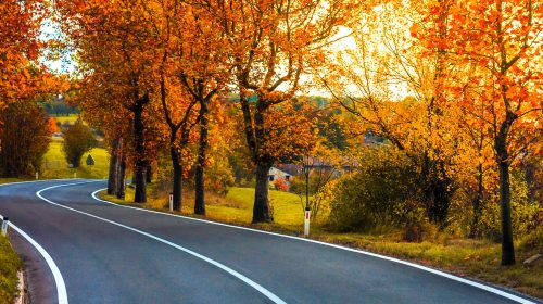 Fall Colors Drive Jigsaw Puzzle